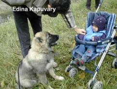 großen hund erziehen